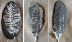 plumes-terre-w.jpg