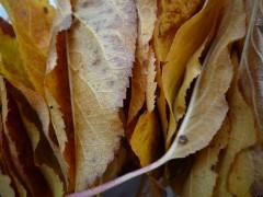 Lumix feuilles 002-w.jpg