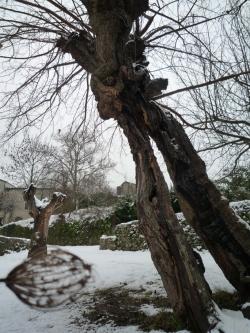 P1410572-saisons-w.jpg