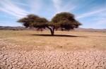 Desert photoMarc Deotte.jpg